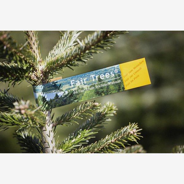 Nordmanntanne Weihnachtsbaum.Toomeigenmarken Fair Trees Weihnachtsbaum Nordmanntanne Gesägt 150 190 Cm Von Toom