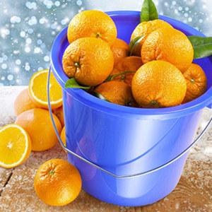 """Ein Eimer voll Spanien Orangen """"Navelinas"""" mindestens 5,5 kg, Kl. II, je Eimer"""