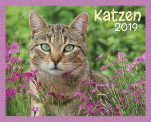 Katzen Kalender-Set 2019, 8tlg.