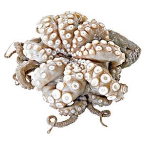 Pulpo oder Kalmar ideal für die mediterrane Küche, Wildfang, mittlerer Ostatlantik,  vor Verkauf aufgetaut, je 100 g
