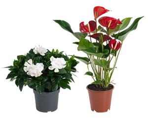 GARDENLINE®  Exotisches Pflanzensortiment