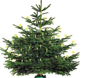 Fair Trees Nordmann-Tanne 180-220 cm