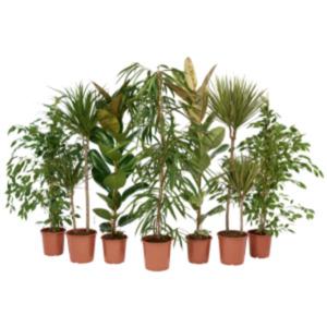 Grünpflanzen Mix