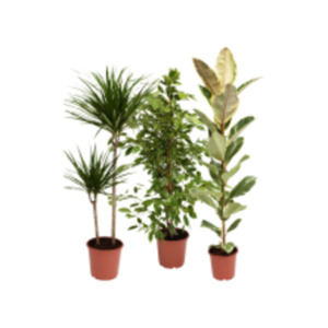 Grünpflanzen-Mix