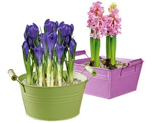 GARDENLINE®  Blumenzwiebeln im Metallgefäß