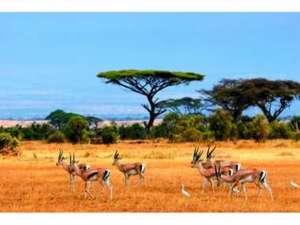 Kenia – Safari & Baden