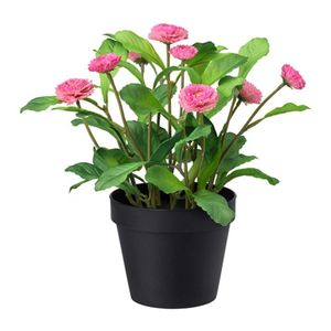 FEJKA   Topfpflanze
