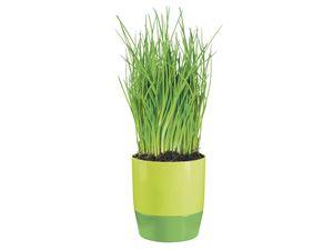 FLORABEST® Kräutertopf mit Bewässerungssystem