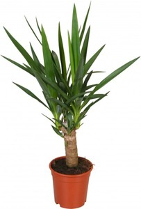 Grünpflanzen 17 cm Topf