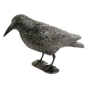 Taubenschreck