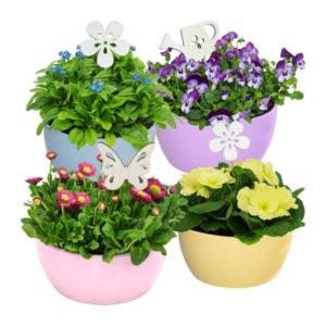GARDEN FEELINGS     Bepflanzte Frühlingsschale