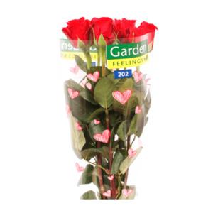 GARDEN FEELINGS     Rote langstielige Rosen