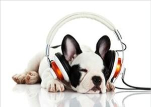 Bild Decopanel ,  DJ Puppy, 140 x 100 cm