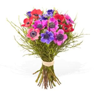 Frühlingsprickeln - Fleurop Blumenversand