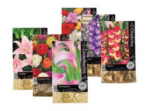 Premium-Blumenzwiebeln