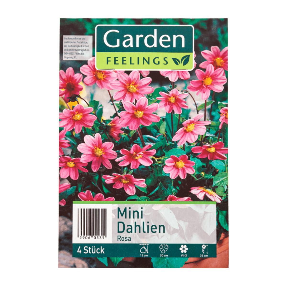 Bild 3 von GARDEN FEELINGS     Frühjahrsblumenzwiebeln