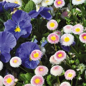Beetpflanzen Frühlingsmix