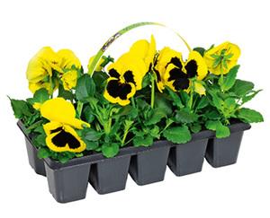 GARDENLINE®  Beetpflanzen Frühlingsmix