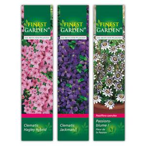 Finest Garden Winterharte Kletterpflanzen