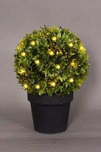 Trendline Buchsbaum Beleuchtet ,  warmweiß