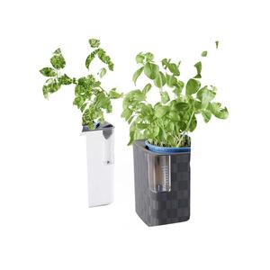 Kräutertopf mit Bewässerungssystem