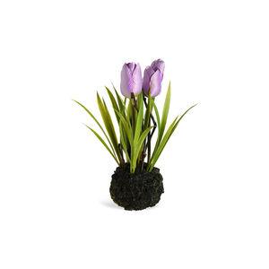 Tulpen in Erde, H:20cm, flieder