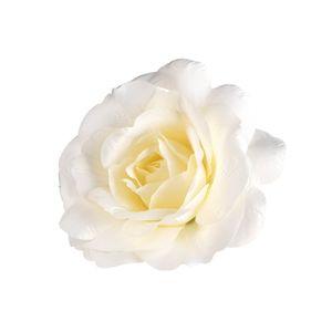 Dekoobjekt Blüte Rose, D:26cm, weiß