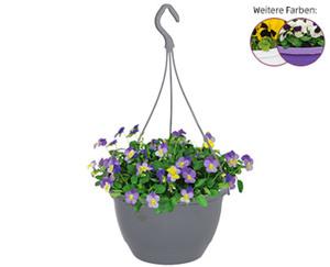GARDENLINE®  Viola-Ampelpflanze