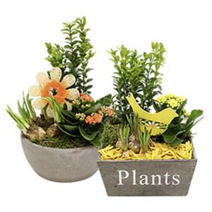 Bepflanzte Frühlingsschalen, versch. Ausführungen, Abb. ähnlich, jede Schale