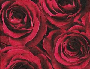 Vliestapete Rosenblüte