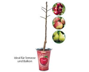 GARDENLINE®  Obstbaum im Zinkeimer