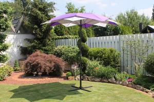 LECO - Schirm-Blüte, Farbe: violett / gestreift