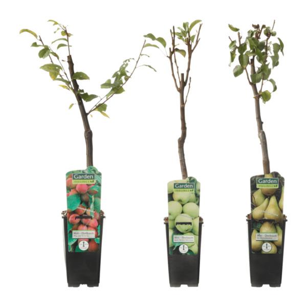 Garden Feelings Mini Obstbaum Von Aldi Nord Ansehen Discountode