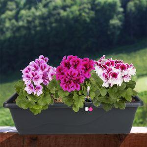 Blumenkasten Extra Line mit Bewässerungssystem 59x16,5x20,5cm Anthrazit