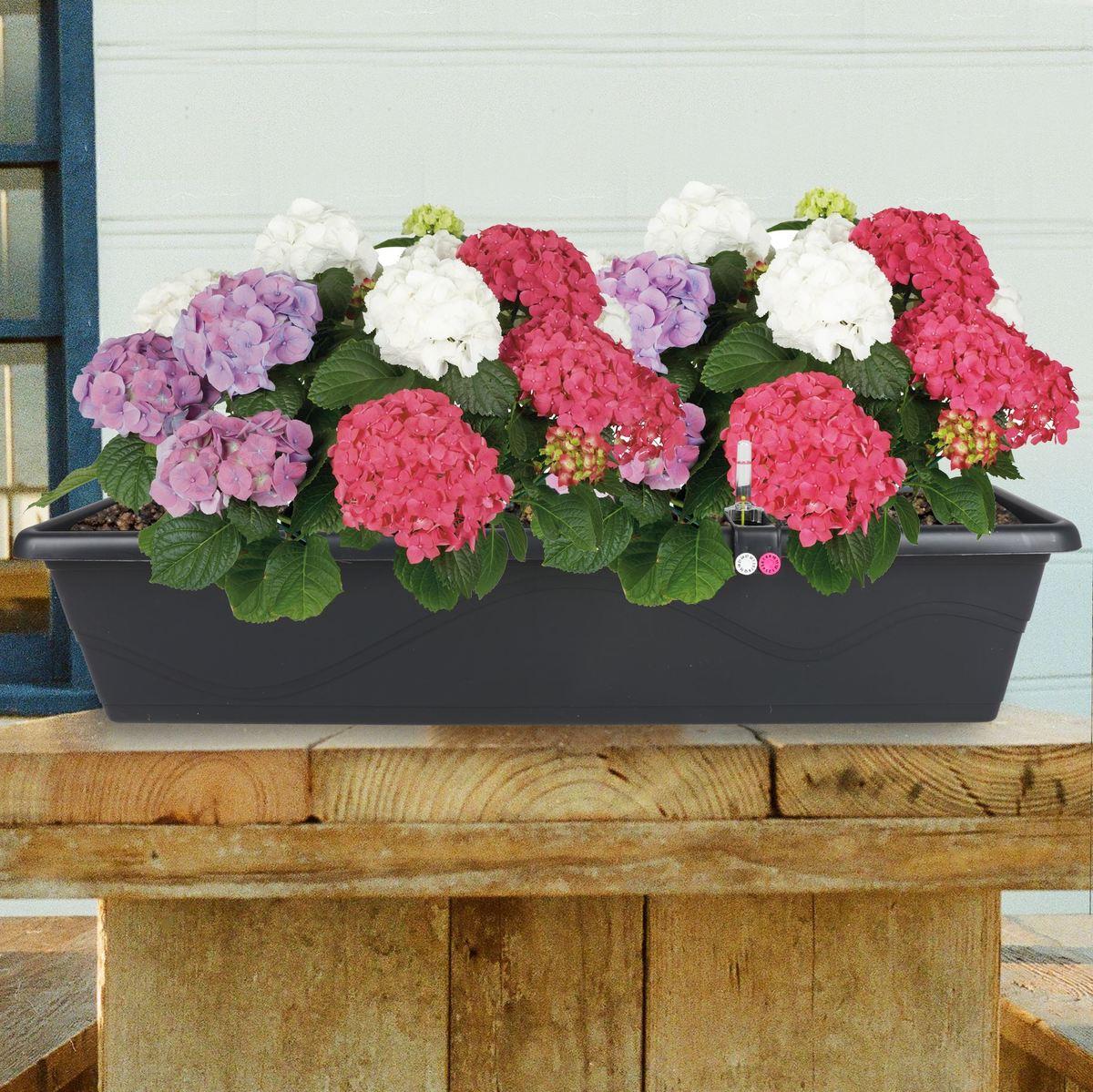 Bild 1 von Blumenkasten Extra Line mit Bewässerungssystem 79x16,5x20,5cm Anthrazit