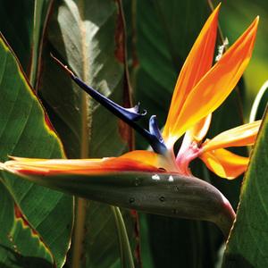 Finest Garden Blühende Gartenraritäten