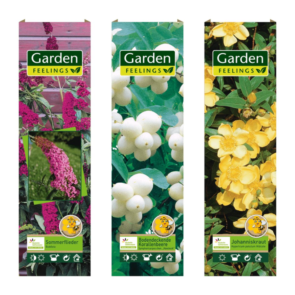 Bild 1 von GARDEN FEELINGS     Bienenfreundliche(r) Zierstrauch / Kletterpflanze