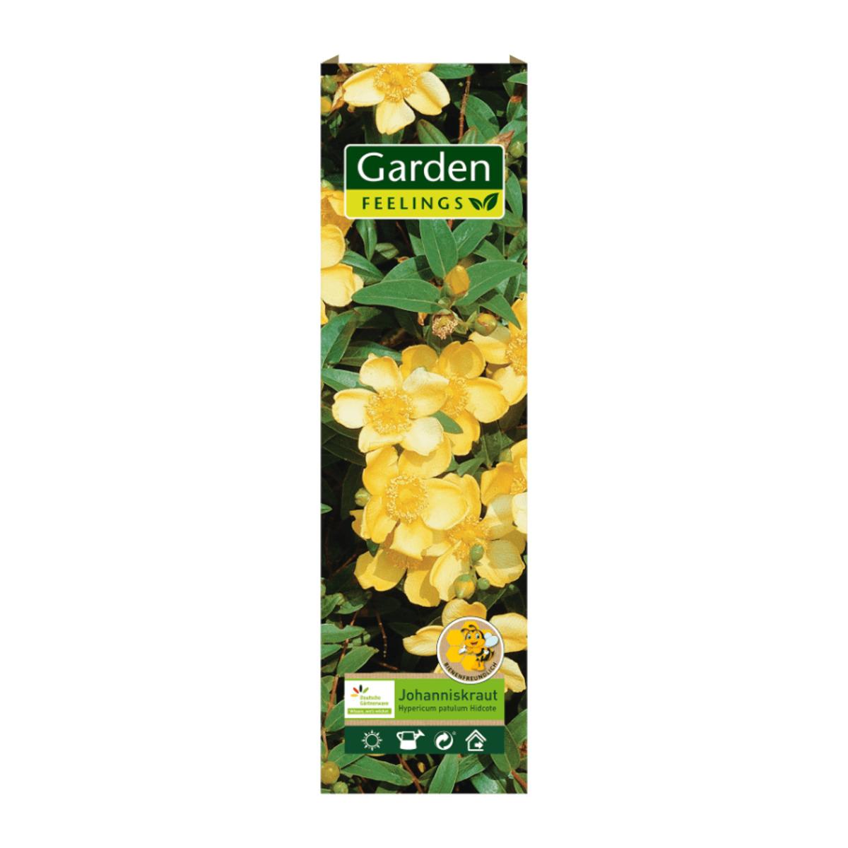 Bild 3 von GARDEN FEELINGS     Bienenfreundliche(r) Zierstrauch / Kletterpflanze