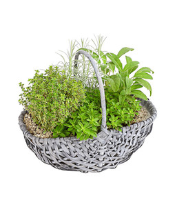 Bepflanzter Kräuterkorb mit Grillkräutern