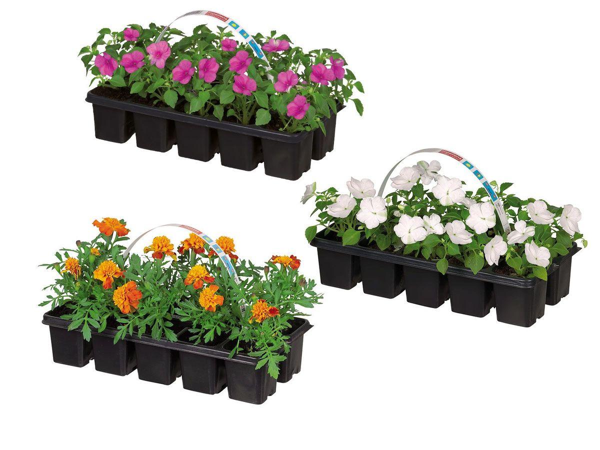 Bild 1 von Beetpflanzen