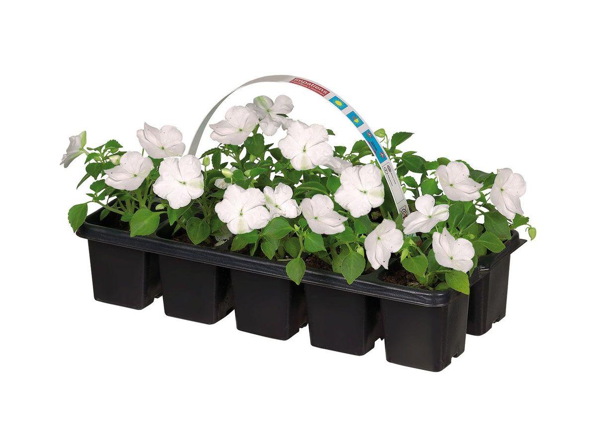 Bild 3 von Beetpflanzen