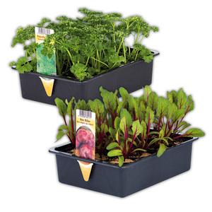 Gemüsepflanzen-Mix