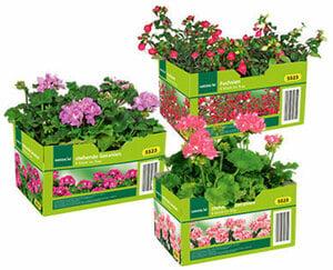 GARDENLINE®  Beet- und Balkonpflanzen