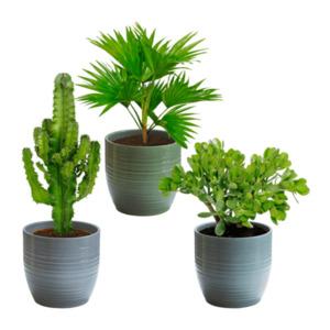GARDEN FEELINGS     Kaktus / Palme