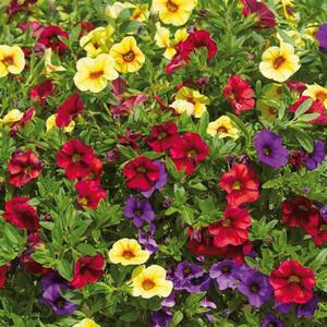 Blühpflanzen-Mix