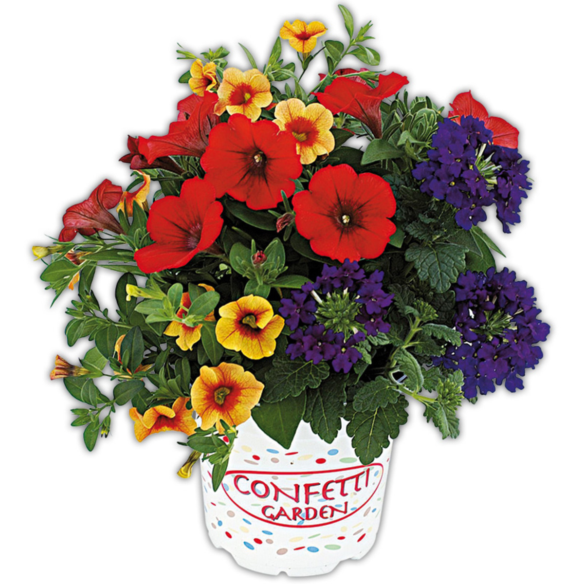 Bild 2 von Blühpflanzen-Mix