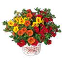 Bild 3 von Blühpflanzen-Mix