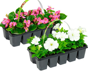 GARDENLINE®  Beetpflanzen, 10er-Tray