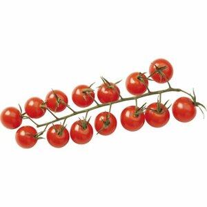 "Tomate Kirschtomate ""Pepe"" Topf-Ø ca. 12 cm Solanum"