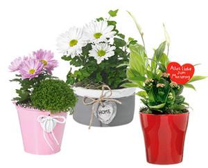 GARDENLINE®  Muttertagspflanzen